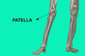 Image result for patella