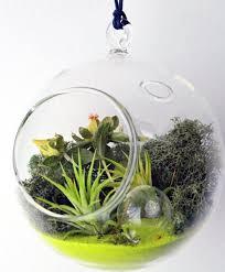 Beautiful Indoor Hanging Air Moss Terrarium Ideas