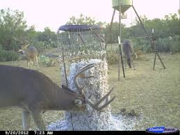 can you show me your cotton seed feeder texasbowhunter com we even put lids on ours because i have seen coons try and make nest in the cages and make a mess of your cottenseed