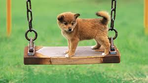 1920x1080 1920x1080 hd pics photos beautiful playing dog funny pet s hd quality desktop background wallpaper