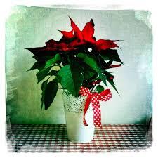 Weihnachtsstern Poinsettia Hipstamatic Dreamcanvas Johns