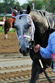 2015 Belmont Stakes Chart Frosted Horse Wikipedia