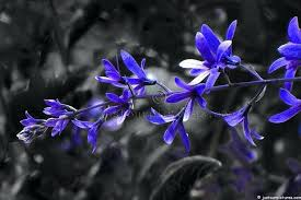 names of blue flowers location new photographer names of blue flowers in india