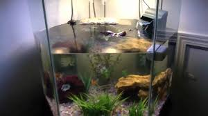 Turtle Tank Decor My Awesome Turtle Tank Youtube