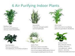 best indoor house plants house plants pictures and names beauteous house plants names good house plants