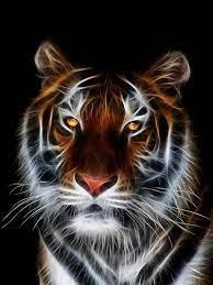 Fire Tiger, 3d, abstrat, background ...