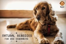 natural remes for dog deworming