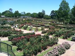 visit the largest rose garden in america in tyler texas tripstodiscover
