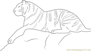 Small Picture Royal Bengal Tiger Coloring Page Free Tiger Coloring Pages