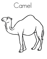 Small Picture Printable Camel Coloring Pages Coloring Me