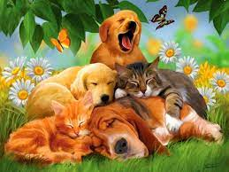 Cute Animal Wallpapers for Desktop ...