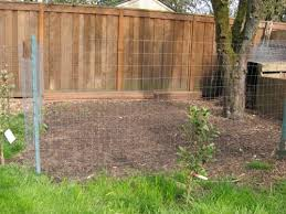 A Practical Guide To Keeping Chickens Chicken BasicsHow To Keep Backyard Chickens