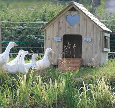 Pin by Alan Roseto on Country Living | Duck house, Duck house ...
