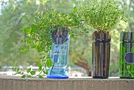 hydroponic herb garden. Hydroponic Garden In Large Blue Glass Upcycled Bottle / Indoor Herb Vodka Gifts Planter Terrarium Hydroponics Herbs From P