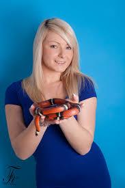 milk snake size snakes alive media snakes serpents living dinosaurs large