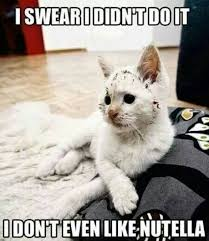 I swear I didnt do it - funny cat meme | Funny Dirty Adult Jokes ... via Relatably.com