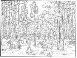 Small Picture Forest Coloring Pages Ppinewsco