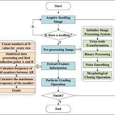 Grading Scale Calculator Chart Flow Chart Of Seedling Grading Procedure Download