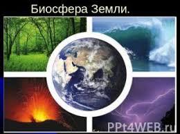 Экосистемы Реферат