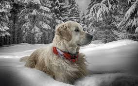 winter animal nature backgrounds. Plain Nature 2560x1600 Px Glenda Price Free Animal Winter Desktop Wallpaper For Nature Backgrounds