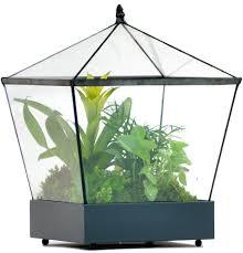 modern glass terrarium containers