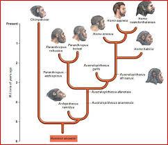 Human Evolution Timeline Chart Human Evolution Timeline Human Evolution Tree Human