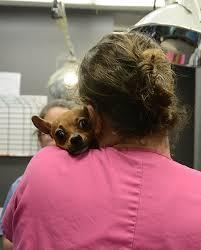 About Herschel Animal Clinic | Veterinarian Jacksonville FL