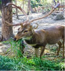 how to keep deer out of your garden. How To Keep Deers Out Of Vegetable Garden Deer Your O
