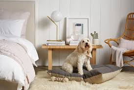 parachute is now ing dog beds so you can pamper your pup even more