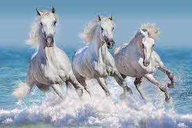 Fotobehang Dieren Fotobehang Paarden 1