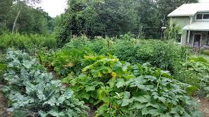 Kitchen Garden Farm News Archive Quaker Intentional Village Canaan