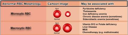 Variations In Red Blood Cell Morphology Size Shape Color