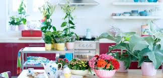 Tuinplant En Woonplant Juli Praxis Blog