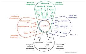 Venn Diagram Of Vascular And Nonvascular Plants The Protein Acetylome And The Regulation Of Metabolism