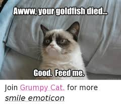 grumpy cat good smile.  Good Cats Goldfish And Grumpy Cat Your Goldfish Died Good Feed Me For Cat Good Smile U