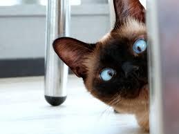 """Résultat de recherche d'images pour """"cat home"""""""