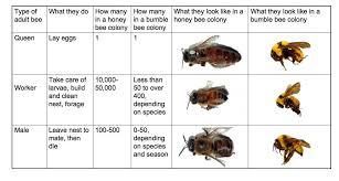 Bee Behaviour Chart Social Behavior Beespotter University Of Illinois