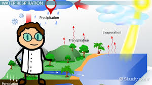 respiration in the water cycle video lesson transcript com