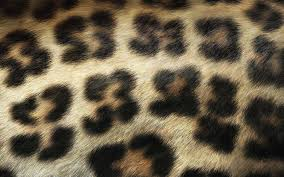 Pink Leopard Print Wallpaper For Bedroom 48 Units Of Leopard Print Wallpaper