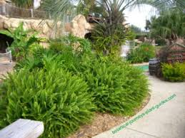 Image result for ferns in landscaping