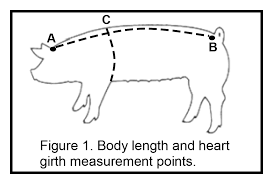 Show Pig Weight Gain Chart Monitoring Your Show Pigs Progress Animal Agriculture