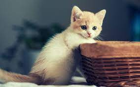 Girly Cute Kittens Wallpaper - Novocom.top