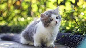Wallpaper Cat, Kitten, Cute Animals, 4k ...
