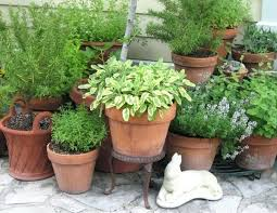 best outdoor potted plants in full sun