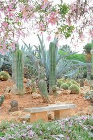Small Picture 311 best succulent and cactus gardens images on Pinterest Desert