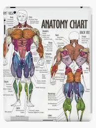 Anatomy Chart Muscle Diagram Ipad Case Skin By Superfitstuff
