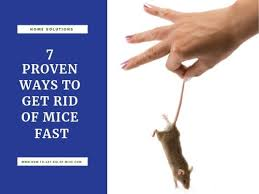7 proven ways to get rid of mice fast