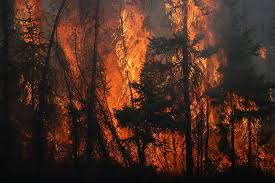 Image result for forest fire near town