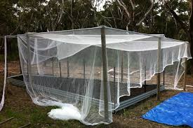 vegetable patch covered in bird netting