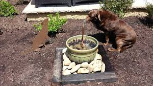 dog water fountain outdoor dog water fountain outdoor for park dog park water fountain outdoor dog water fountain outdoor